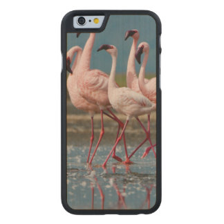 Male Lesser Flamingos (Phoenicopterus Minor) Carved Maple iPhone 6 Case