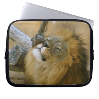 Male Lion Scratching Laptop Sleeve