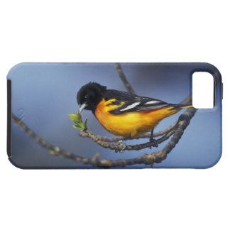 Male Northern Oriole, formerly Baltimore Oriole iPhone 5 Covers
