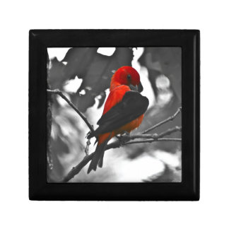 Male Scarlet Tanager Gift Box