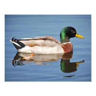 Mallard Duck on Water 11 Cm X 14 Cm Invitation Card