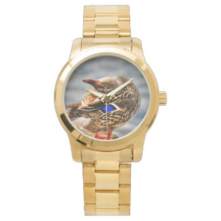 Mallard Duck Watch