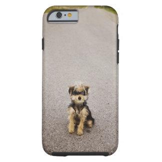 Maltese, Yorkshire terrier mix. Alberta, Canada Tough iPhone 6 Case