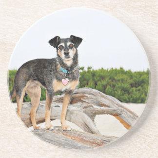 Manchester Terrier X - Jordan - Derr Coaster