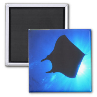 Manta Ray Silhouette Square Magnet
