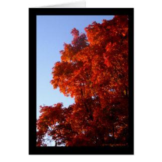 Maple in Reds & Oranges Cards