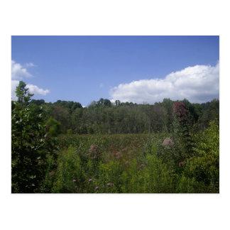 Maple Meadows Postcard