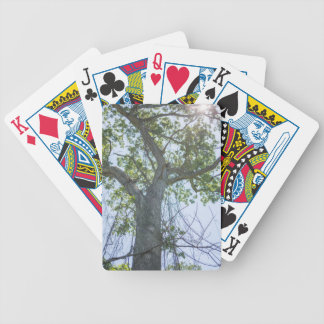 Maple Tree Bicycle Playing Cards