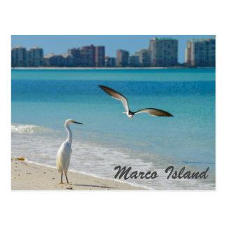 Marco Island Wildlife postcard