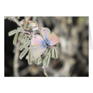 Marine Blue Butterfly Greeting Cards