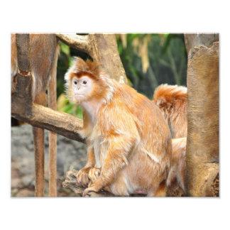 Marmalade Monkeys Photo Print