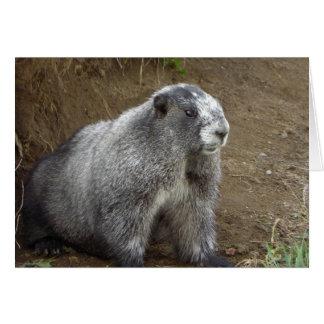 Marmot Card