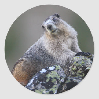 marmot classic round sticker