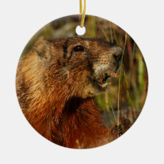 marmot eating grass christmas ornament