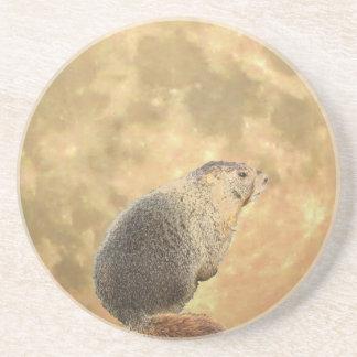 Marmot Moon Coaster