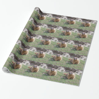 Marmot Wrapping Paper