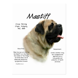 Mastiff (fawn) History Design Postcard