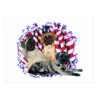 Mastiff (puppies) Patriot Postcard
