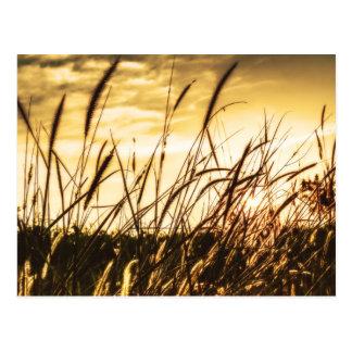 Meadow In Autumn Postcard