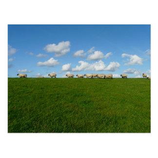 Meadow Landscape Postcard