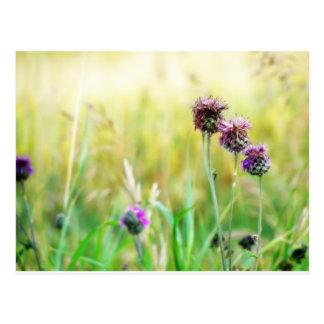 Meadow postcard