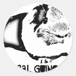 Medical Guinea Pig Classic Round Sticker