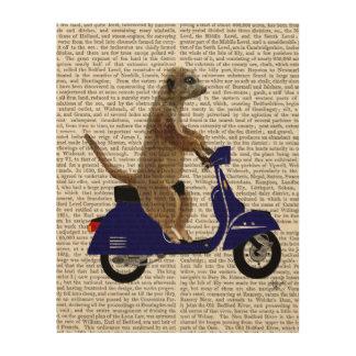 Meerkat on Dark Blue Moped Wood Print
