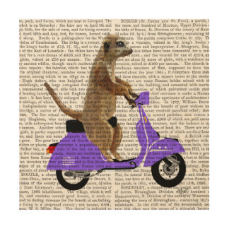 Meerkat on Lilac Moped Wood Print