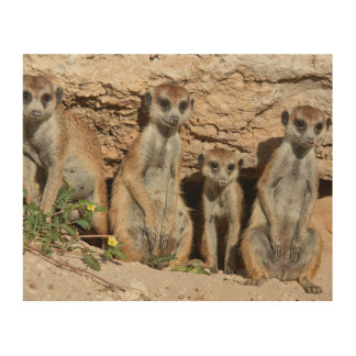 meerkat or suricate, Suricata suricatta Kalahari Wood Wall Decor