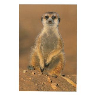 Meerkat (Suricata Suricatta) Sentinel At Den Wood Wall Art