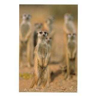 Meerkat (Suricata Suricatta) Sentinels, Karas 2 Wood Wall Art