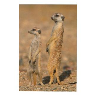 Meerkat (Suricata Suricatta) Sentinels, Karas Wood Wall Art