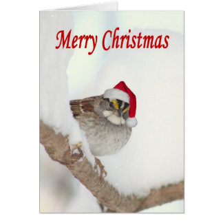 Merry Christmas bird with Santa hat greeting card