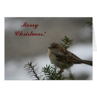 Merry Christmas Sparrow! Card