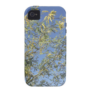Mesquite Branches Against Sky iPhone 4 Cases