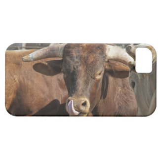Mess With the Bull You Get the Horns iPhone 5 Cases