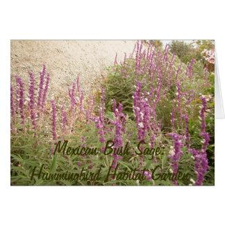 Mexican Sage Habitat Card