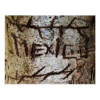 Mexico Carved Tree Graffiti Post Card