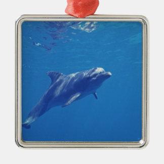 Mexico, Cozumel. Bottlenosed Dolphin Christmas Ornament