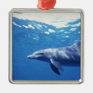 Mexico, Cozumel. Bottlenosed Dolphin, Tursiops 3 Christmas Ornament