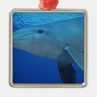 Mexico, Cozumel. Bottlenosed Dolphin, Tursiops 4 Christmas Ornament