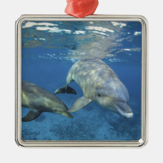 Mexico, Cozumel. Bottlenosed Dolphin, Tursiops 5 Christmas Ornament