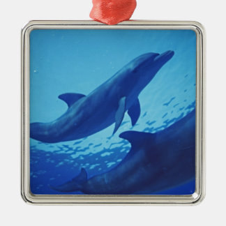 Mexico, Cozumel. Bottlenosed Dolphin, Tursiops Christmas Ornament