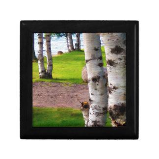 Michigan Birch Trees By Lake Gift Box