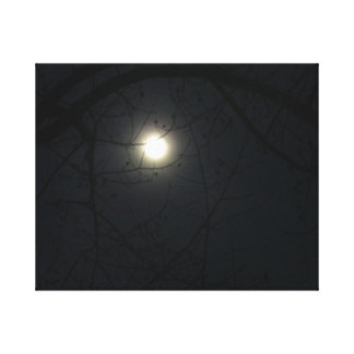 Midnite Moon Gallery Wrapped Canvas
