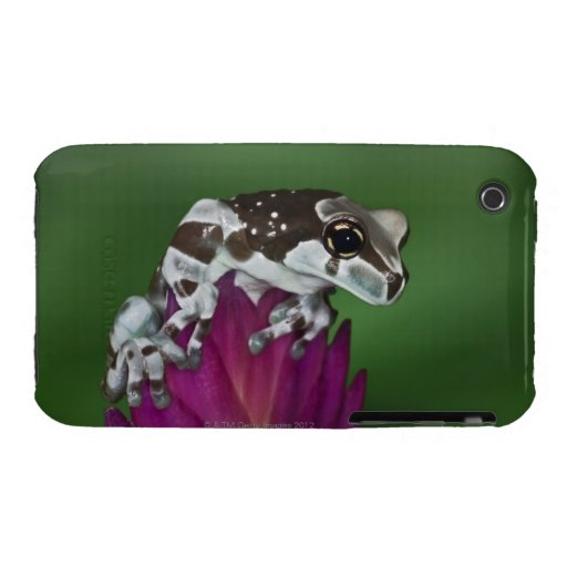 Milk Frog, Trachycephalus resinifictrix iPhone 3 Cases