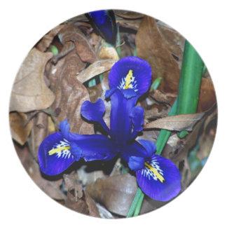 Miniature Blue Dutch Iris Plate