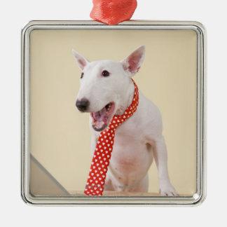 Miniature Bull Terrier looking at laptop, Christmas Ornament