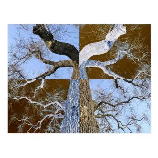 Mirror Opposite Tree Postcard