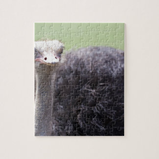 Miscellaneous - Ostriches Patterns Seven Jigsaw Puzzle